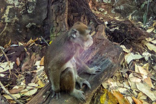 Palawan monkeys nature Philippines